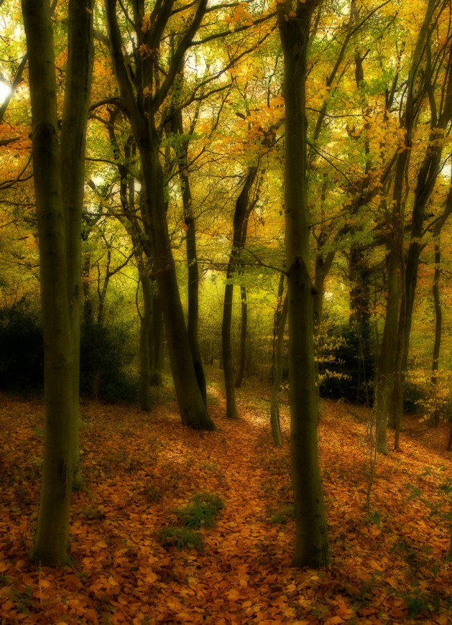 Autum Woodland Path