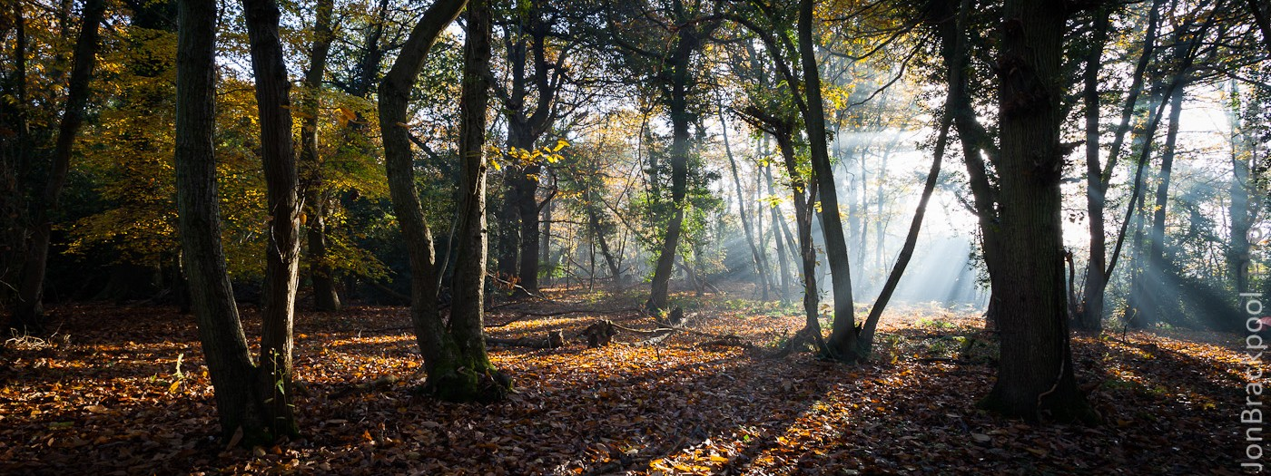 Autumn Woodland Mist